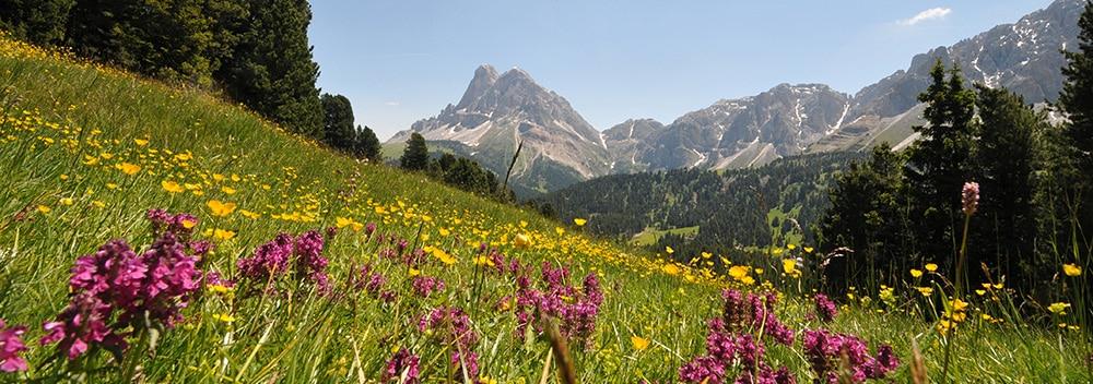 Chalet mieten bei Brixen in den Dolomiten