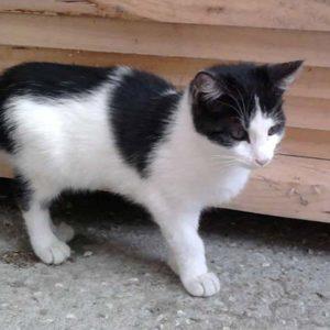 Katze am Niederthalerhof
