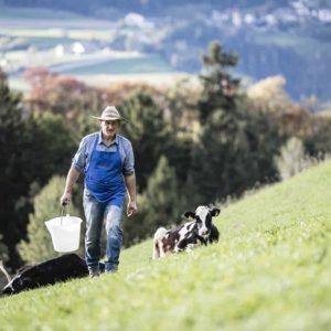 Bauer Franz bei den Kühen