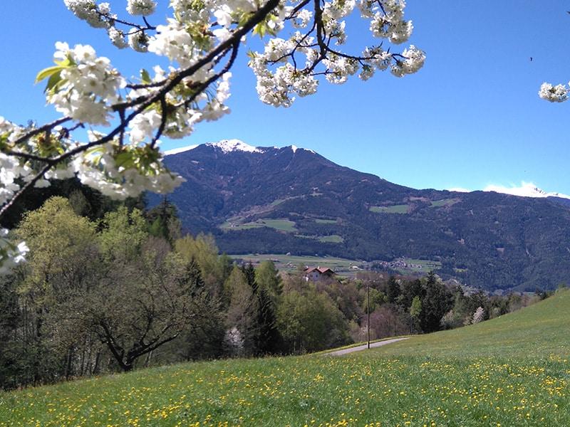 Aussicht auf den Radlsee im Frühling